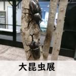 大昆虫展IN東京スカイツリー2019に行ってきたレビュー・内容ご紹介!子供は大興奮!